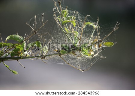 Cobweb on branch - stock photo