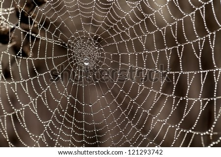 Cobweb with dew drops. Can be used as background - stock photo