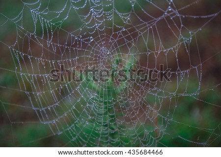 Cobwebs in the dew - stock photo