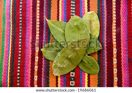 Coca Leaves on background Andean tapestry - stock photo