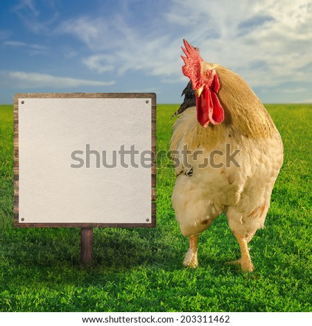 Cock showing the blank white board - square composition - soft focus - stock photo