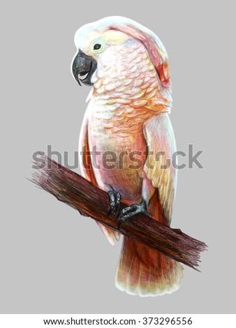 Cockatoo drawing - stock photo
