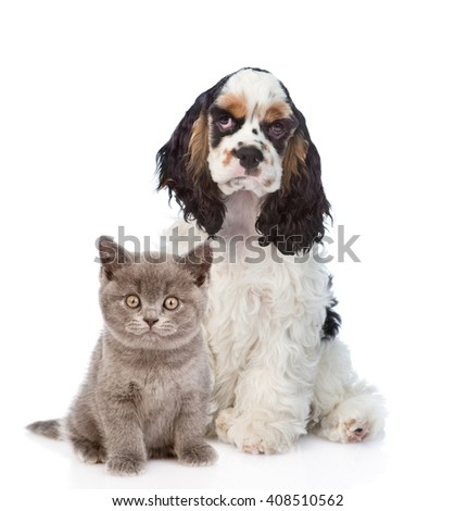 Cocker Spaniel puppy with baby kitten. Focus on cat. Isolated on white background - stock photo