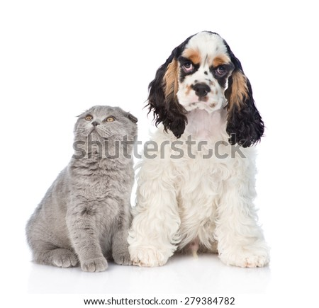 Cocker Spaniel puppy with young kitten. Focus on cat. Isolated on white background - stock photo