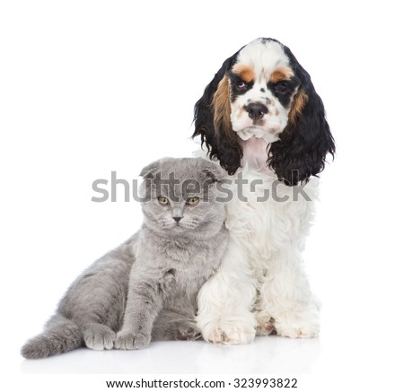Cocker Spaniel puppy with young kitten. isolated on white background - stock photo