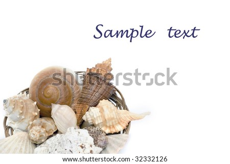 Cockleshells in a basket on the white isolated background - stock photo