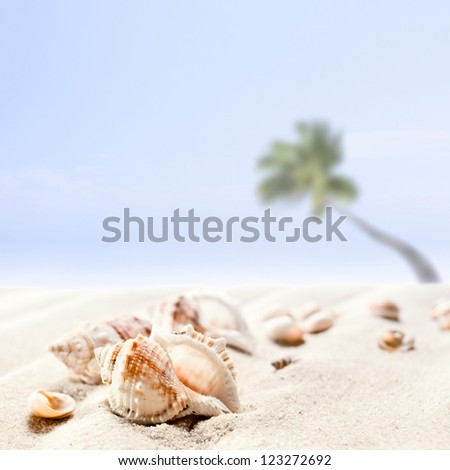 Cockleshells on a beach , focus on a foreground - stock photo
