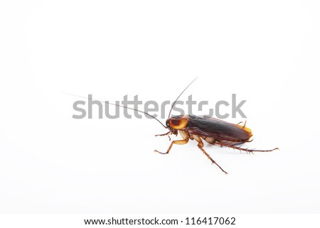 Cockroach - stock photo