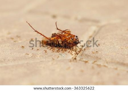 Cockroach - stock photo