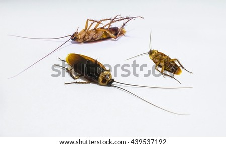cockroach dead get rid  insecticide - stock photo