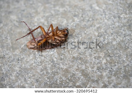 cockroach eaten by ants close up - stock photo