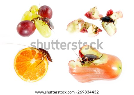 cockroach  eating fruit   Concept of cleanliness. Clean food storage - stock photo