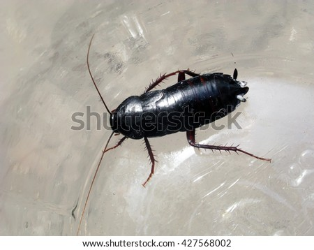cockroach in a glass jar. the urban environment and its inhabitants. - stock photo