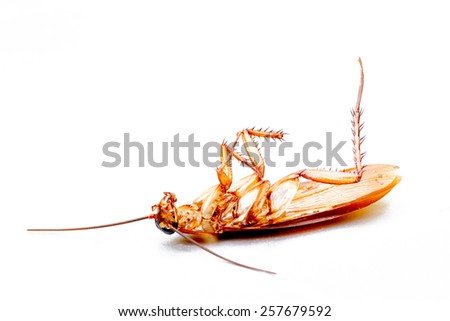 Cockroach isolated on white. Taken from side. - stock photo