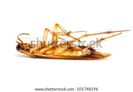 cockroach lying upside down - stock photo