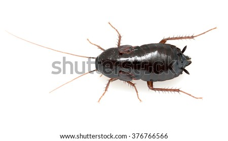 cockroach on a white background - stock photo