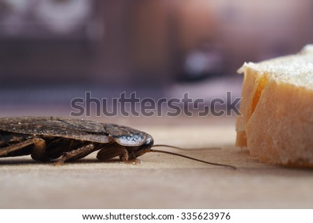 Cockroach on the kitchen table. Roach feels the mustache bread. the problem of insects in the apartment. The ugly cockroach - stock photo