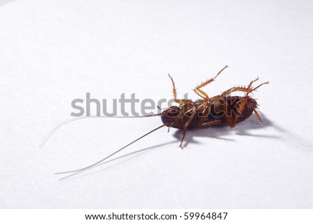 cockroach on the plain background - stock photo