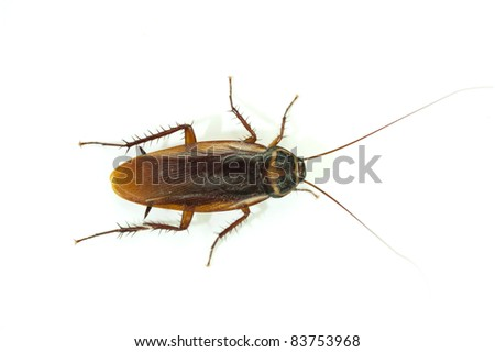 cockroach on white background. - stock photo