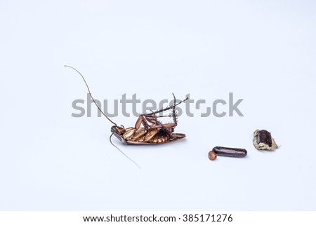 cockroach show the whole body with cockroach egg on isolated white background  - stock photo