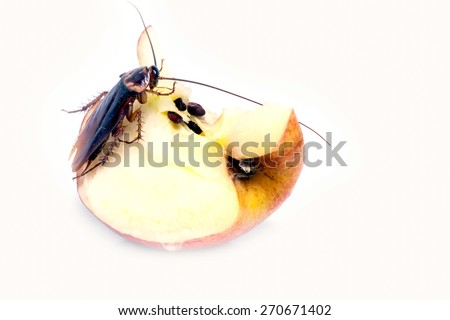 cockroach sitting and eating on a red apple (focus on cockroach). Image isolated on white  studio background. - stock photo