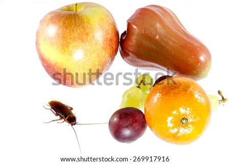 Cockroaches and fruit  isolated on white background , Concept of cleanliness. Clean food storage - stock photo