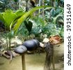 coco-de-mer, Vallee de Mai, Praslin, Seychelles - stock photo