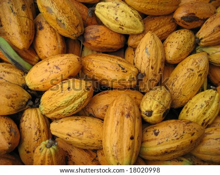 Cocoa bean (also cacao bean) is the dried and fully fermented fatty seed of Theobroma cacao, from which cocoa solids and cocoa butter are extracted. - stock photo