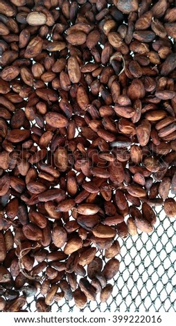 Cocoa beans drying on grid.