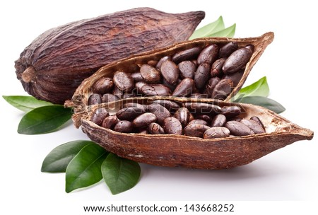 Cocoa pod on a white background. - stock photo