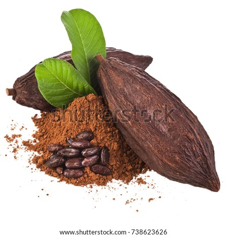 cocoa bean and cacao pod borer