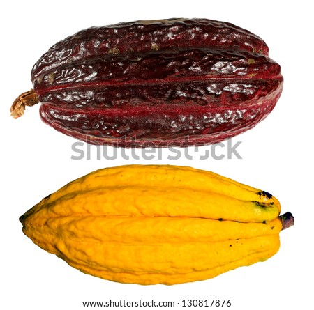 Cocoa pods (Theobroma cacao) from Ecuador.  CCN-51  hybrid pod above. Native Arriba pod below. - stock photo