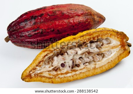 Cocoa - raw fruit to making chocolate - stock photo