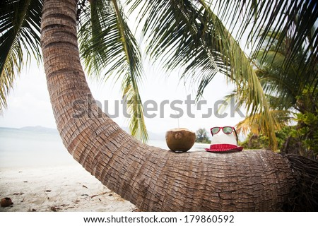 Coconut and hat on palm tree on exotic beach - stock photo