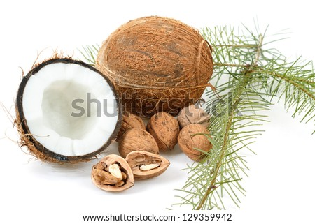 Coconut and walnut on white background with pine twig