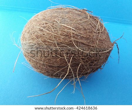 Coconut (cocos nucifera) nut over light blue background