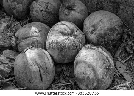 Coconut fruit - stock photo