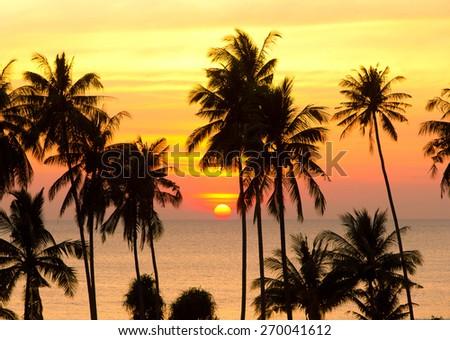 Coconut Horizon Sunset Divine  - stock photo