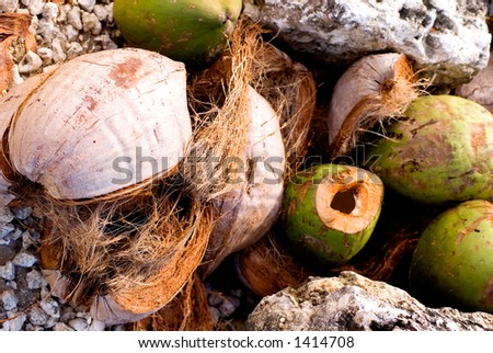 Coconut Husks - stock photo