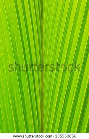 coconut leaf texture