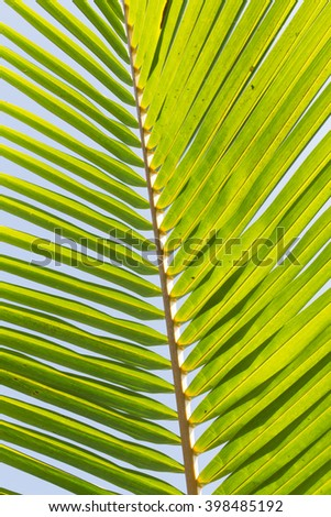 coconut leaves - stock photo