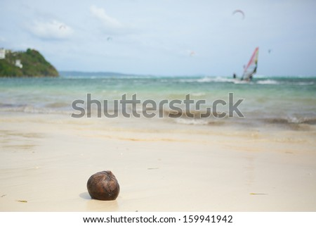 Coconut on a beach and surfers in background