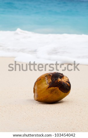 coconut on beach in sand - stock photo