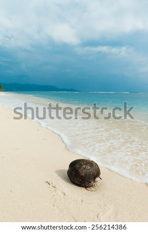 Coconut on the beach at exotic indonesian pacific island location