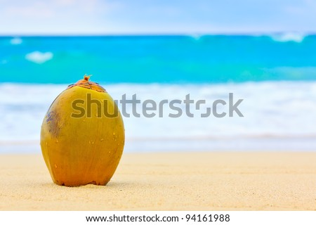 Coconut on the sand of a beautiful beach in Cuba - stock photo