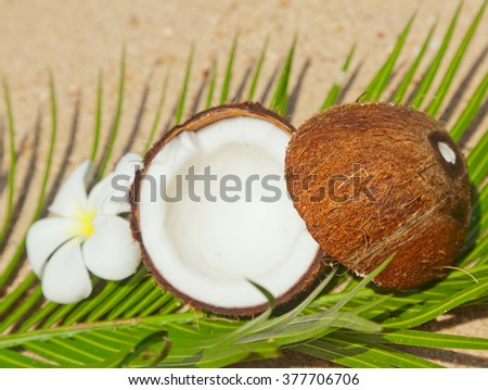 coconut on the sand. Tropicap concept