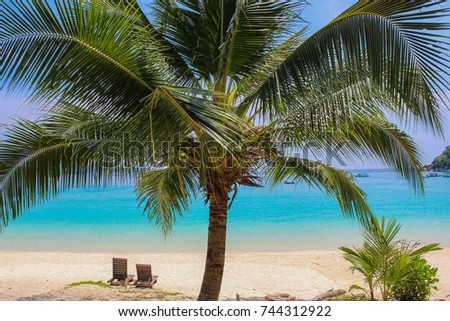 Coconut palm against blue sea and sky in Perhentian Besar island, Malaysia