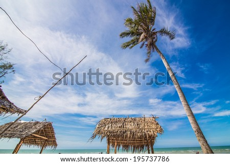 Coconut palm and beach, sea view - stock photo