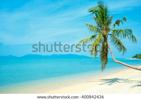 Coconut palm at perfect Thailand beach in Samui - stock photo