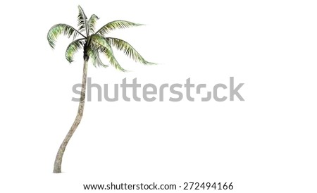 coconut palm isolated on white - stock photo